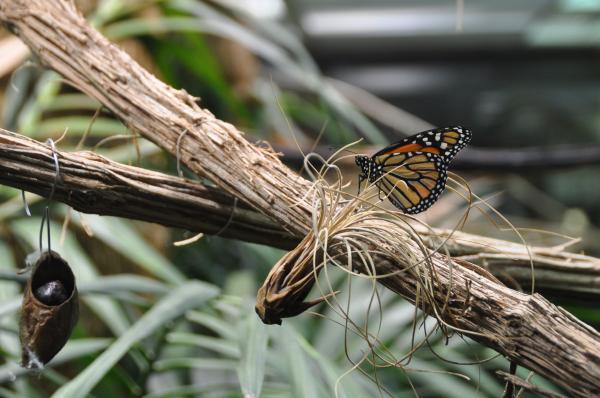 Visite de Micropolis cité des insectes
